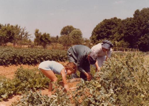 Harry and Lorene Fowler working in their garden with a grandchild