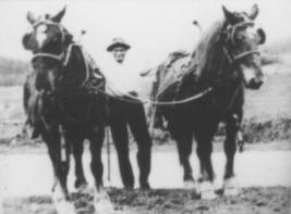 Mary Hays' father with his two workhorses